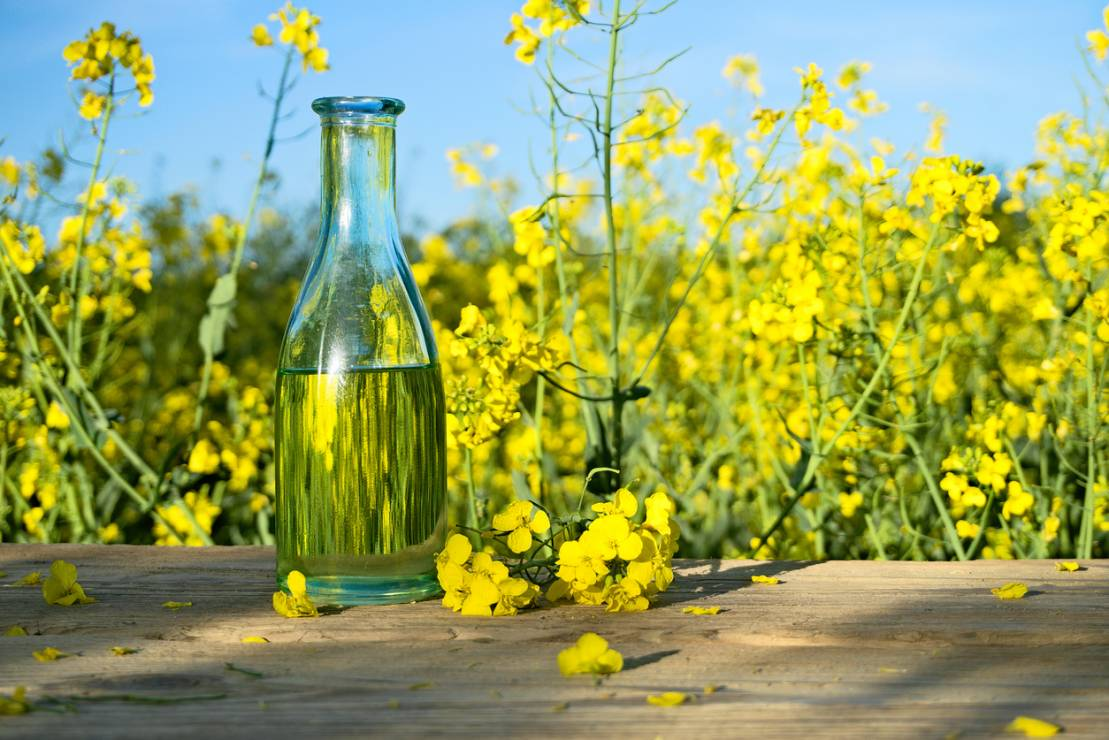 Rapeseed oil – cosmetic properties